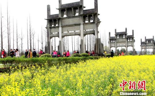 古城歙县油菜花盛开吸引众游客