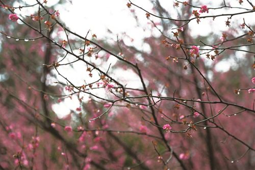 徐州下雨进入随机模式 3月19日气温在9℃以下