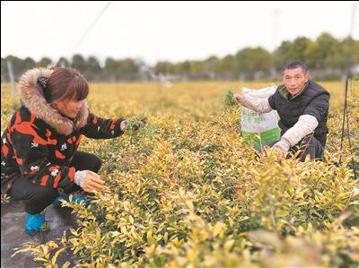 江苏如皋推出系列举措扶持花木盆景产业转型升级