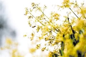 3月,请到海南来看花