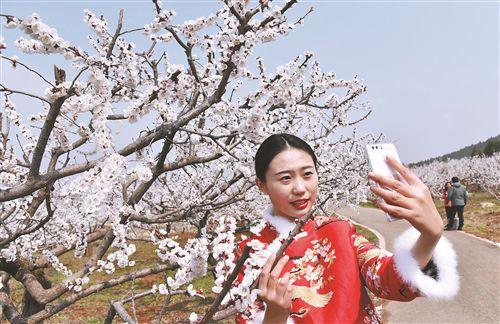 徐州铜山马集村十里杏花林吸引游客带动致富
