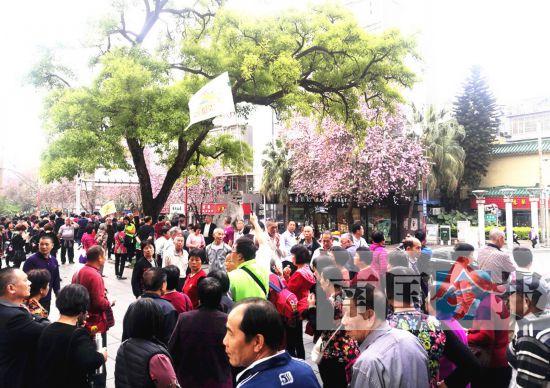 2千名广东游客来柳赏紫荆 30日还有近3千人到访
