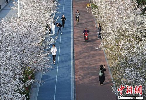 """杭州""""最美跑道""""樱花烂漫引市民观赏"""