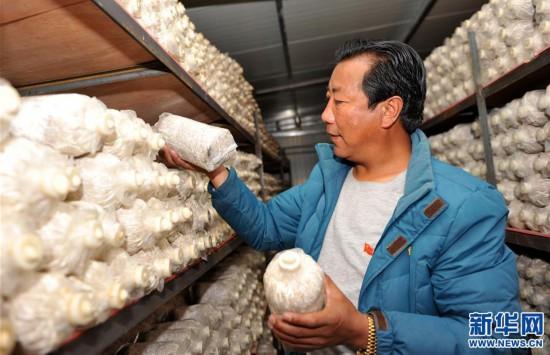 (经济)(2)西藏米林:家庭农场的致富带头人