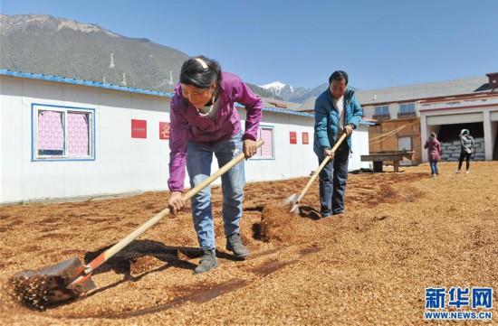 (经济)(3)西藏米林:家庭农场的致富带头人