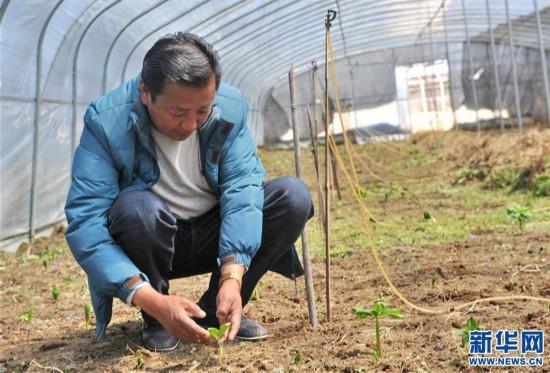(经济)(1)西藏米林:家庭农场的致富带头人