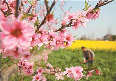 春暖花开 南通农村田间景色如画一派繁忙景象