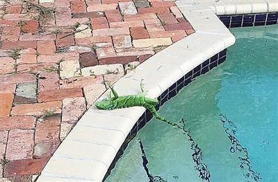 从青蛙到高尔夫球盘点从天而降的奇怪物体