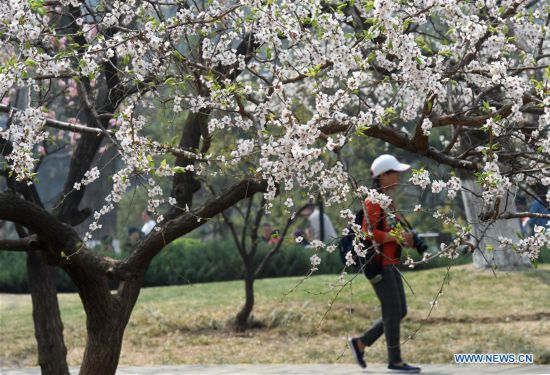 People enjoy outdoor spring leisure time in Beijing