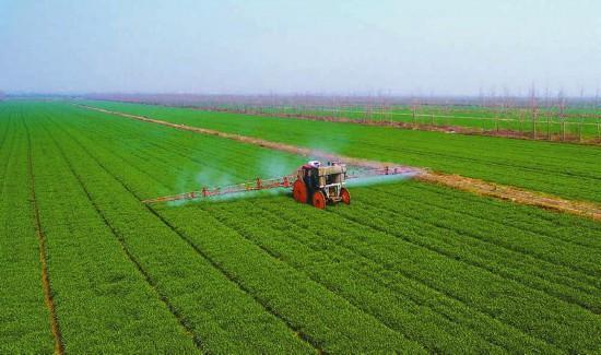 大丰港推广种植特经作物 多渠道促进富民增收