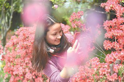 南京国防园10万余株杜鹃绽放 让游客流连忘返