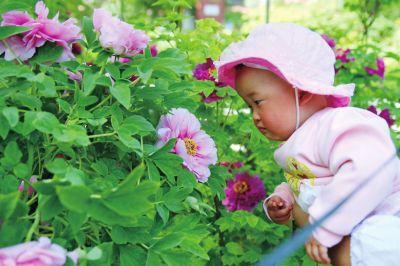 王城公园内,孩子在家人陪同下赏花。