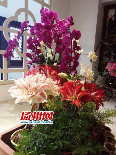 """扬州瘦西湖""""国际名花展""""将展出百余种奇花异草"""