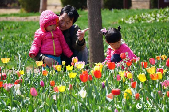 北京:百万株郁金香含苞待放吸引众多游客【5】