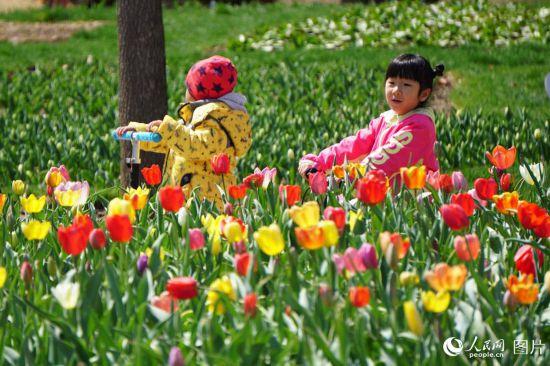 北京:百万株郁金香含苞待放吸引众多游客