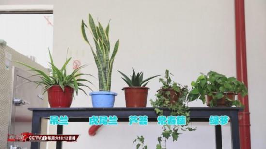 植物能吸收甲醛?专家:效果特别有限