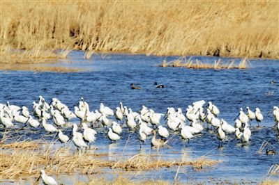 吴忠开展春季湿地鸟类监测