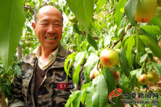 十年油桃种植,供出三个大学生