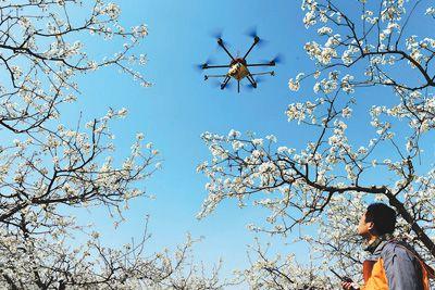 有鸭梨之乡之称的河北省泊头市25万亩梨树进入盛花期