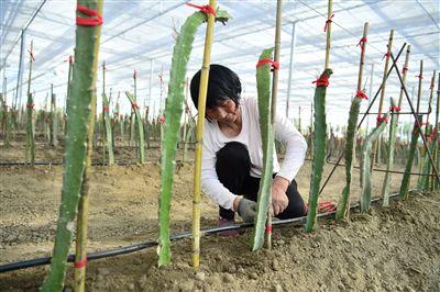 海安落实乡村振兴战略 加快现代农业建设