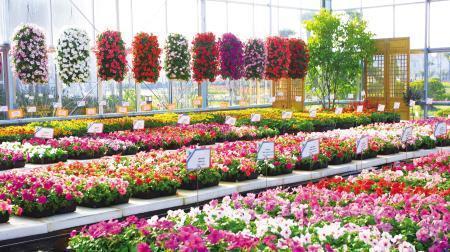 环京津现代都市型农业方兴未艾