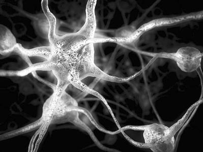 老年人大脑也能长出新细胞