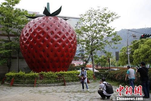 """台湾写真:""""草莓之乡""""未曾褪去的甜蜜澳门日报电子版"""
