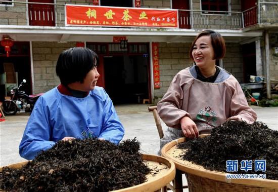 (经济)(14)一片叶子,成就一个乡村