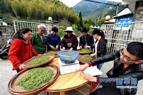 (经济)(9)一片叶子,成就一个乡村