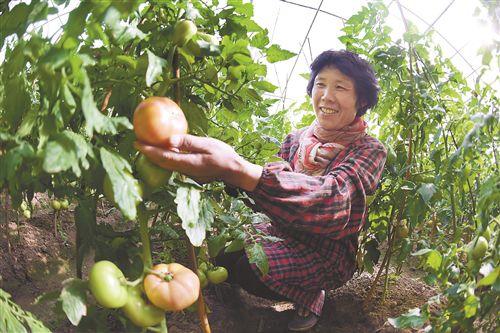 """徐州贾汪区积极发展设施农业 建起""""绿色银行"""""""