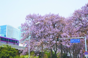 春色亦庄 无边光景