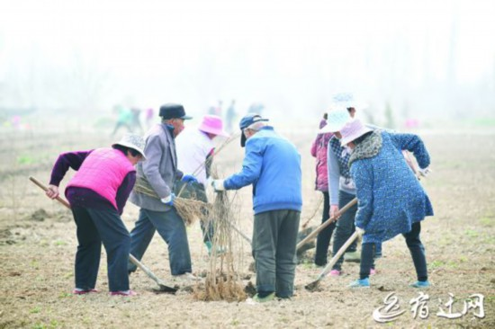 宿迁:栽植特色果木 带动村民致富