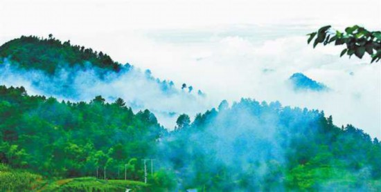 三十九年种下近三万棵树 他们为矿山重披绿装