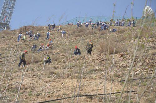 志愿者们在植树