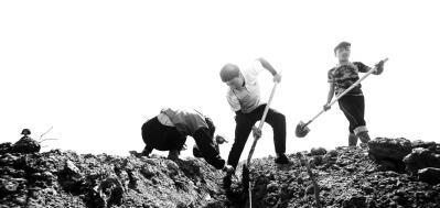 """新疆:把黄沙变成致富的""""金沙"""""""