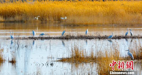同时,玉门市近年来连续新建人工湖4个,湖域面积达20万平方米,每年向人工湖注水320万方,公园绿化面积达800多亩。 杨棋�j 摄