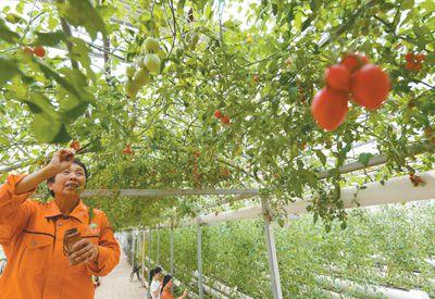 江西樟树市加快高标准农田建设步伐--江西频道