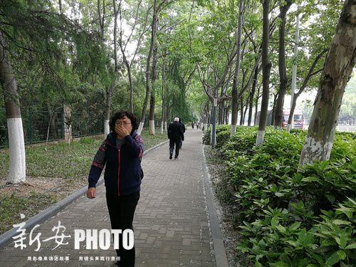 4月份以来,市民频受杨絮困扰。