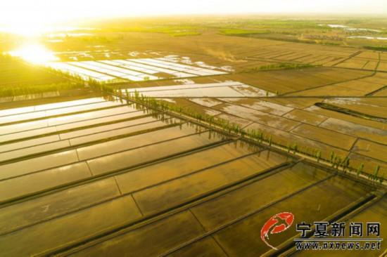 塞上江南稻田灌水