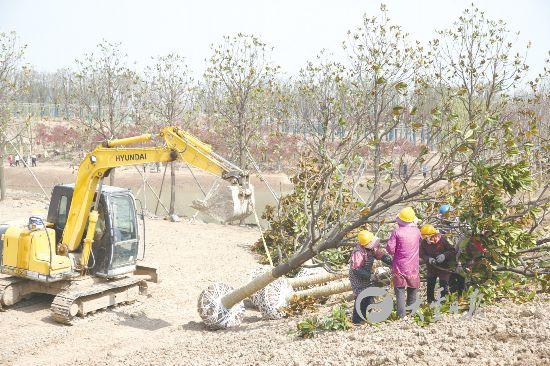 盐城斗龙港生态组团城市森林公园2020年建成