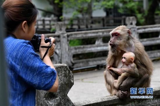 武夷山:猕猴与人和谐相处