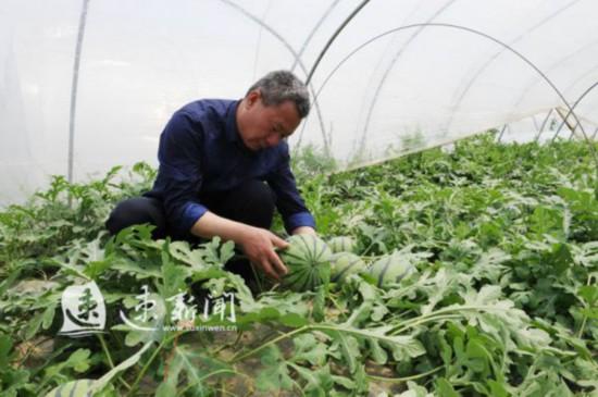 """宿迁:""""大户+农户""""经营模式 实现产业就业富民"""