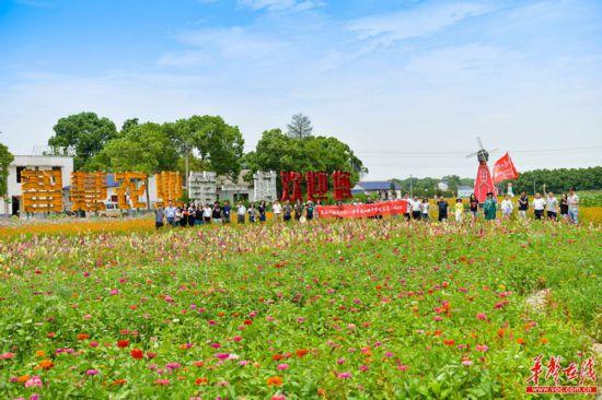 【美丽中国长江行】益阳菱角岔:让绿色有机唱响现代农业主旋律