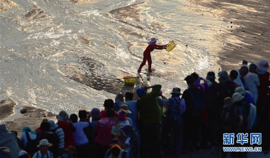 福建霞浦:滩涂美景引客来
