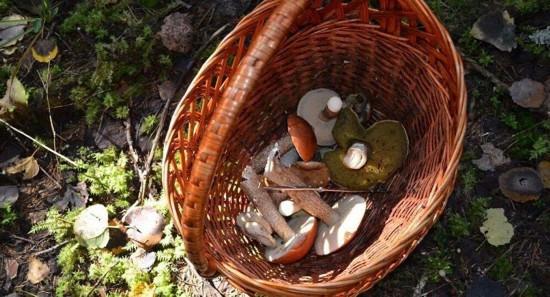 伊朗人与兽_伊朗西部720人食用野生蘑菇中毒 9人丧命