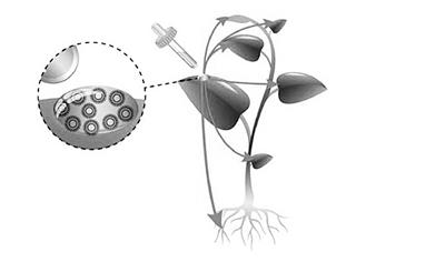 医用纳米粒子可为农作物输送营养