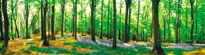 三北防护林护出好生态