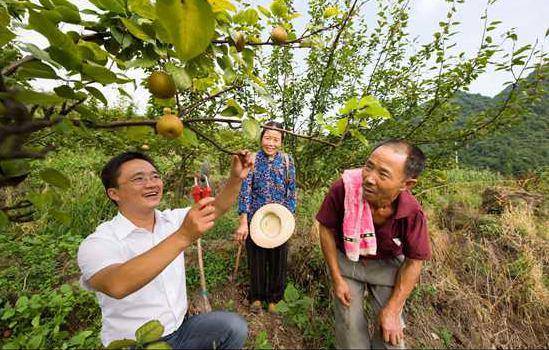 杨大可:每株被善待的果树都是绿色银行
