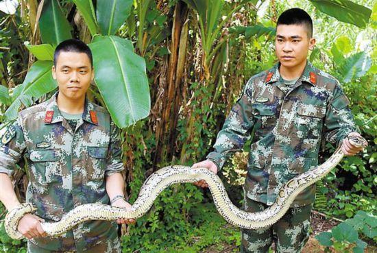 边防官兵捕获大蟒蛇后将其放生.