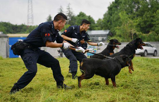 湖北恩施:警犬业务大练兵
